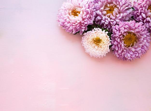 Roze asterbloemen liggen op een roze houten achtergrond. plaats voor tekst.