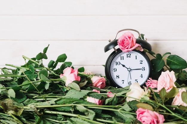 Roze bloeiende rozen en klok