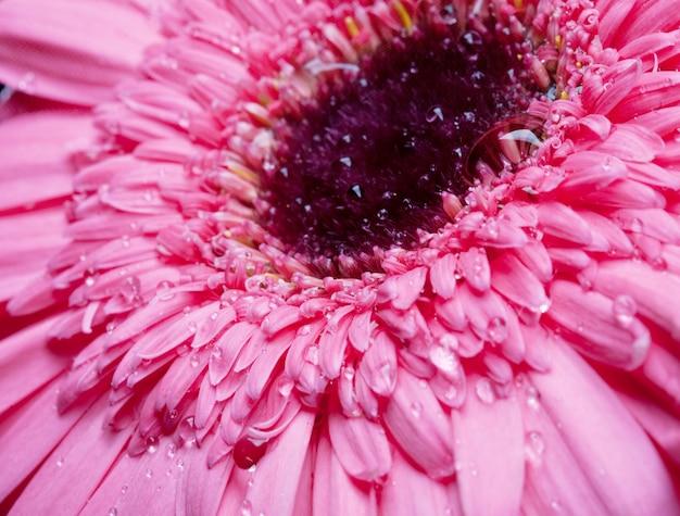 Roze bloem dichte omhooggaand