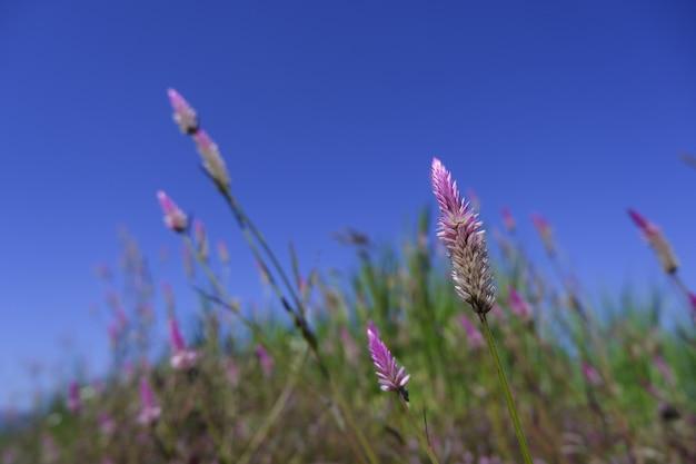 Roze bloem in de natuur tegen blauwe hemelachtergrond