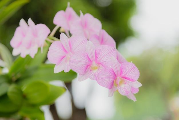 Roze bloem in de tuin.