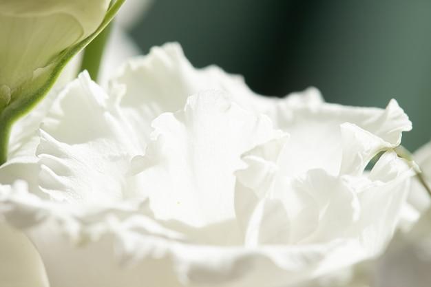 Roze bloem in een tuin bloemenschoonheid en botanische achtergrond voor bruiloft uitnodiging en groet c...