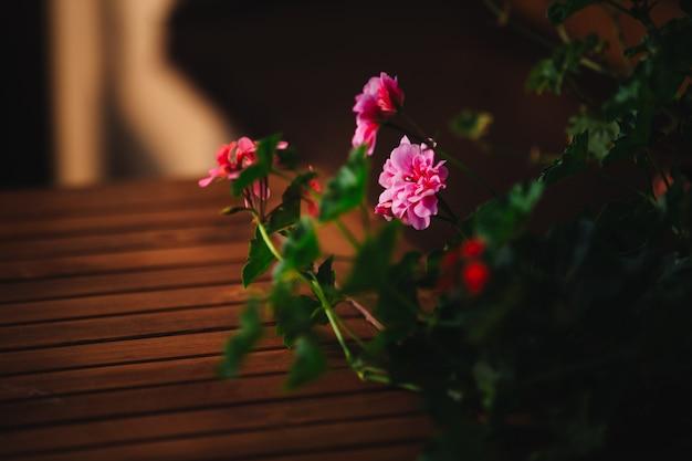 Roze bloem in potten buitenshuis op houten tafel. detailopname. kopieer ruimte. selectieve aandacht