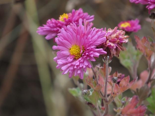 Roze bloem object