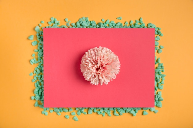 Roze bloem op roze rechthoek met rotsen