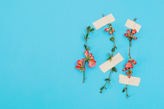 Roze bloem plakband blauwe lente patch witte achtergrond