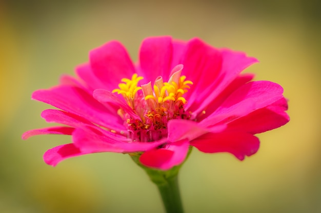 Roze bloemachtergrond