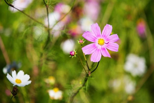 Roze bloembloesem in de tuin