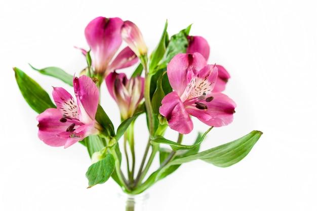 Roze bloemen alstroemeria