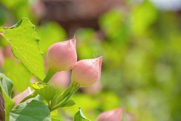 Roze bloemen die bloeiende achtergrond wazig groene bladeren zijn