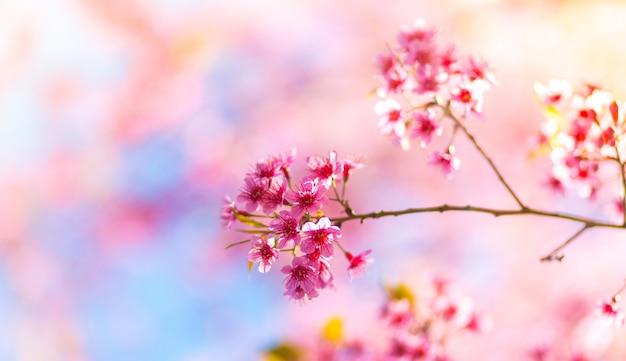 Roze bloemen die worden geboren uit een tak van een boom