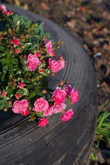Roze bloemen in een wiel