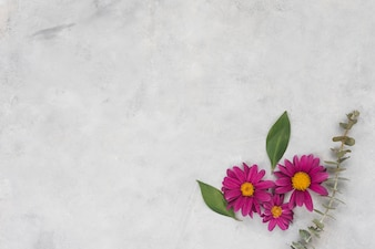 Roze bloemen met bladeren op grijze tafel