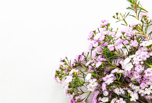Roze bloemen op een witte achtergrond