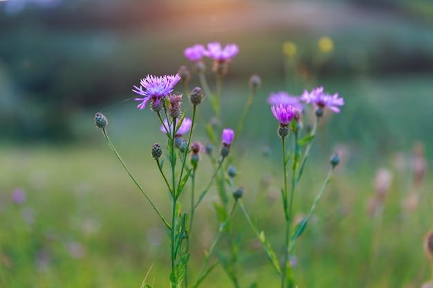 Roze bloemen op groen veld