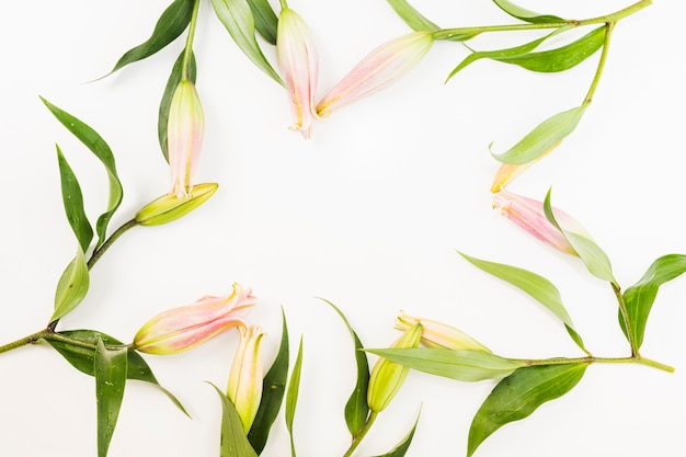 Roze bloemengrens over witte achtergrond