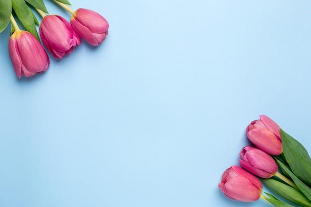 Roze bloementulpen op een blauwe ondergrond