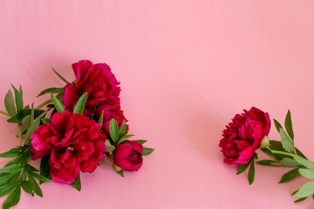 Roze boeket van pioenrozen op roze