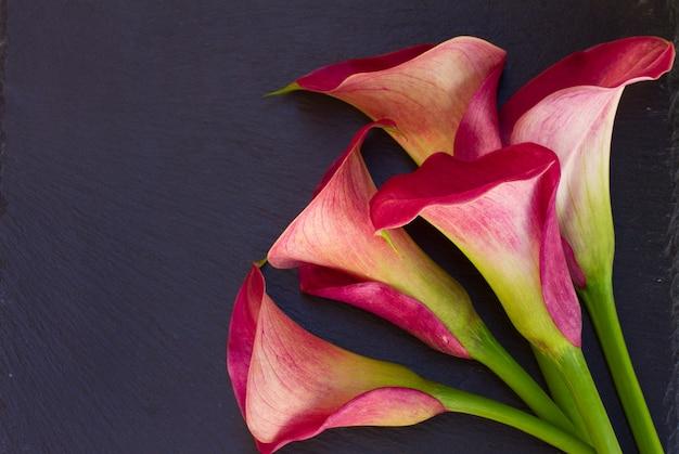 Roze calla leliebloemen