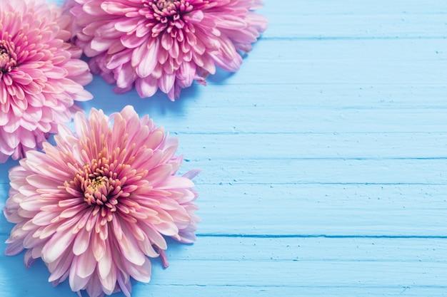 Roze chrysanten op blauwe houten achtergrond