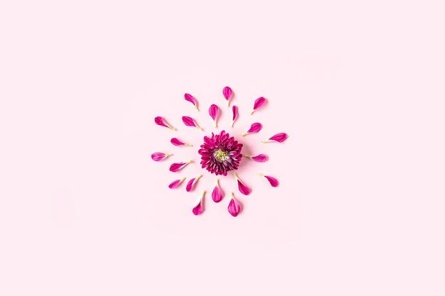 Roze chrysanthemum ligt in het midden op een pastelroze achtergrond en roze bloemblaadjes liggen rond de chrysant