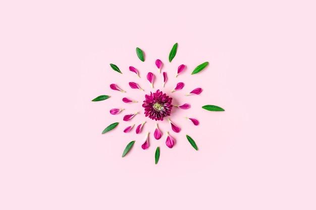 Roze chrysanthemum ligt in het midden op een pastelroze achtergrond met roze en groene bloemblaadjes rond met copyspace,