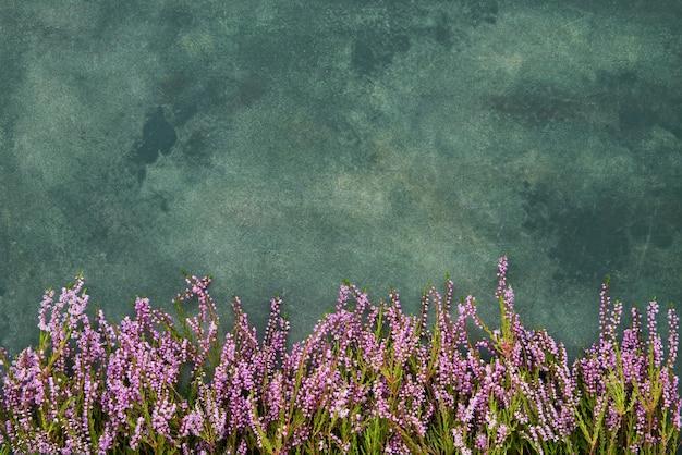 Roze common heather bloemen op een groene achtergrond.