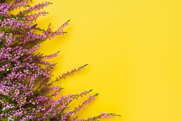 Roze common heather-bloemen op gele achtergrond.