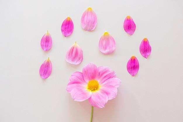 Roze dahlia en bloemblaadjes op pastel