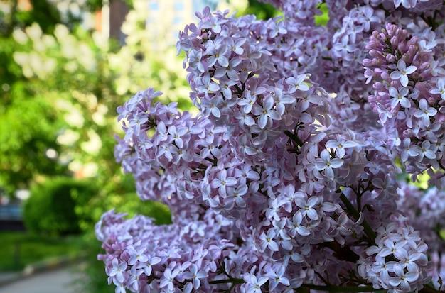 Roze dichte bloeiwijzen op een groene wazige achtergrond lente zuiverheid en frisheid