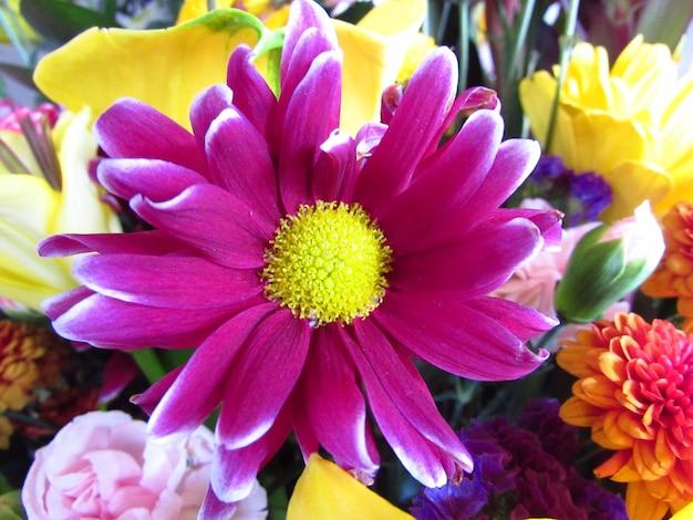 Roze en gele bloem
