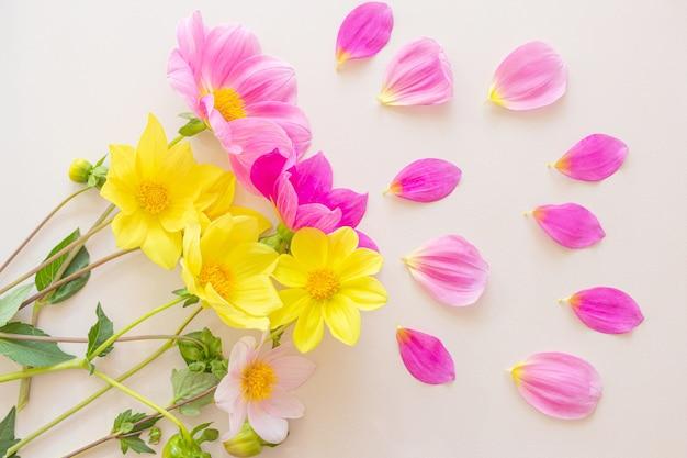 Roze en gele dahliabloemen op pastelkleur