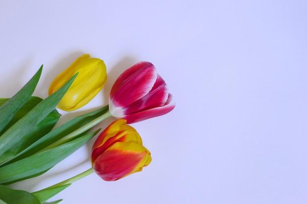 Roze en gele tulpen op een lichte achtergrond.