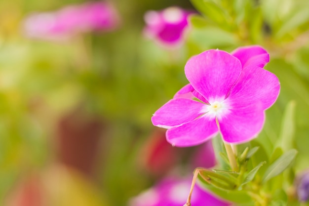 Roze en violette bloem en groene bladonduidelijk beeldachtergrond