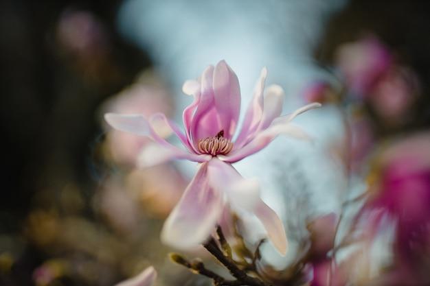 Roze en witte bloem in de lens van de schuine standverschuiving