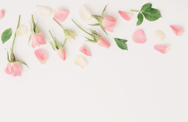 Roze en witte bloemen op wit papier achtergrond