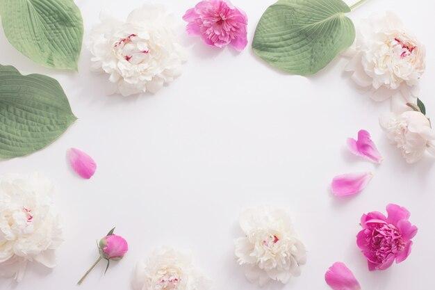 Roze en witte pioenrozen op witte achtergrond