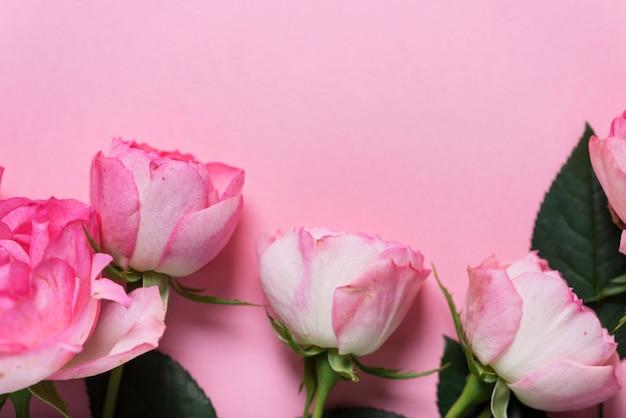 Roze engelse rozen op de roze achtergrond, bovenaanzicht met kopie ruimte