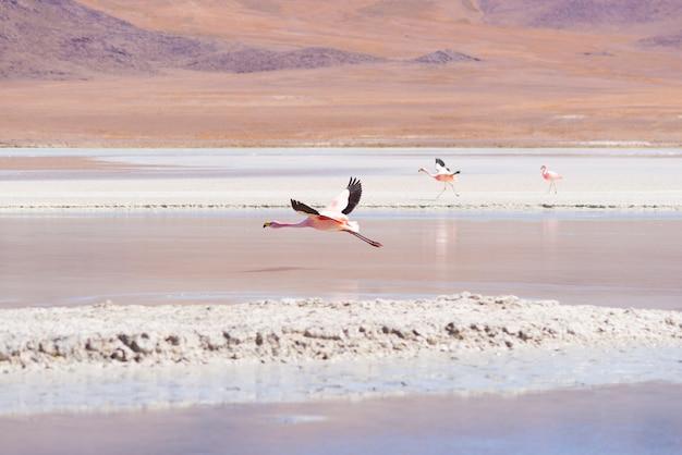 Roze flamingo die over zout meer vliegt