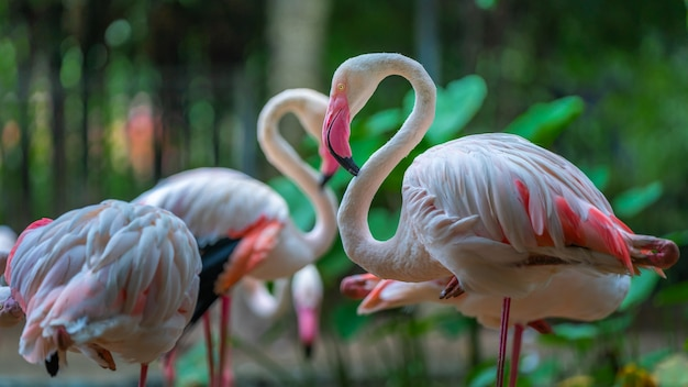 Roze flamingo in de dierentuin