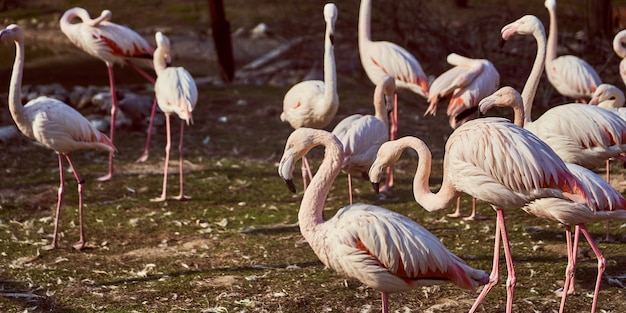 Roze flamingo's in de dierentroep van vogels die op het gras lopen