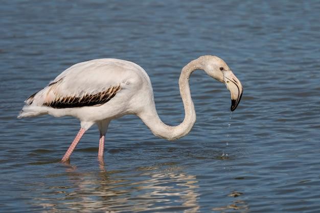 Roze flamingo's in het natuurpark van de moerassen