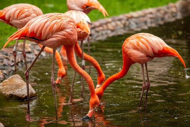Roze flamingo's staan en worden weerspiegeld in helder water