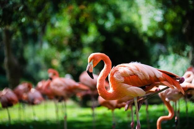Roze flamingo's tegen groene ruimte