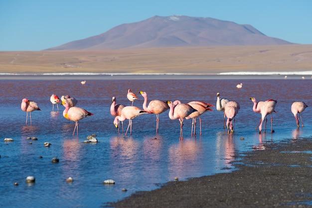 Roze flamingo's
