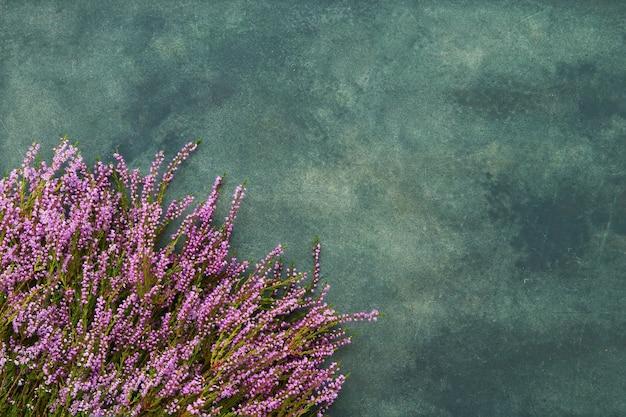 Roze gemeenschappelijke heather bloemen op groene achtergrond. kopieer ruimte voor tekst, bovenaanzicht. platliggend, selectieve focus