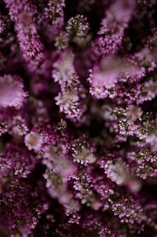 Roze heather flower bush achtergrond