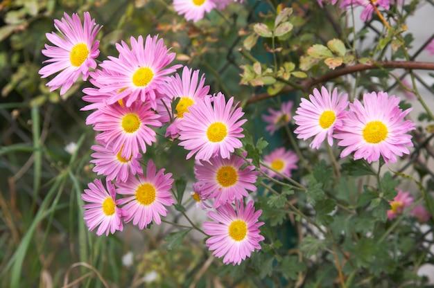 Roze herfst bloemen tak