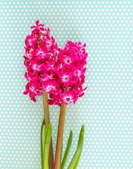 Roze hyacint bloemen