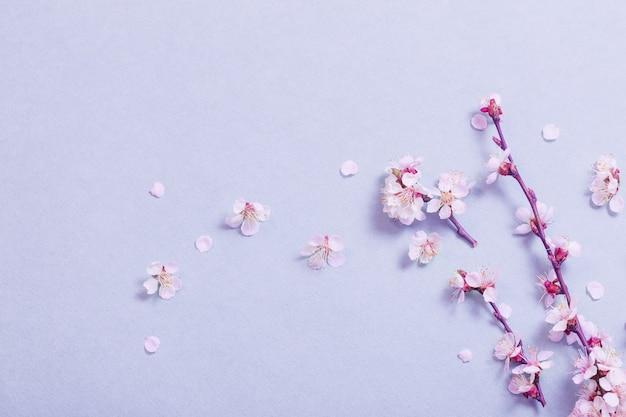 Roze kersenbloemen op papier